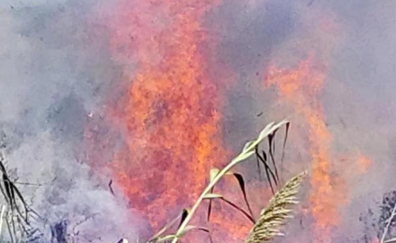 Hatay'da sazlık yangını seraları yaktı